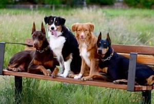 Dobe-Dog park1
